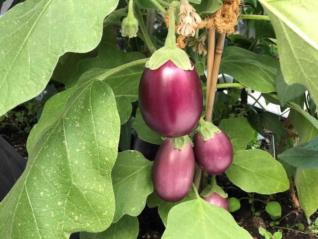 Chef's Handyman Eggplants